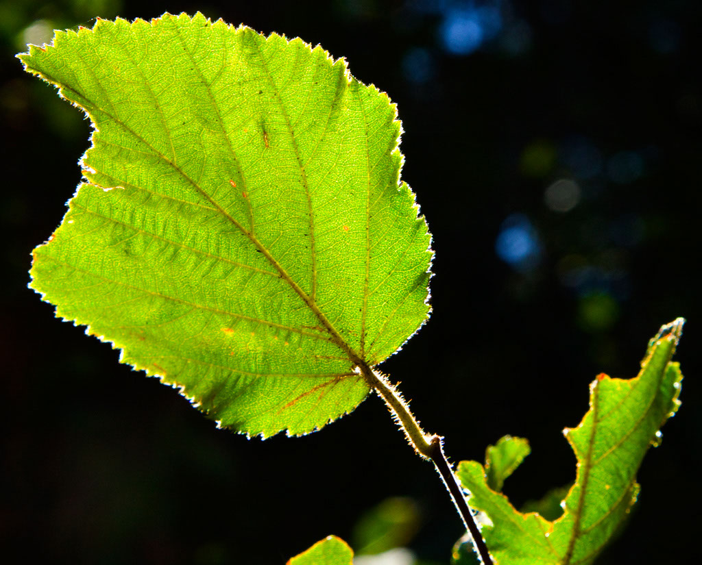 A Leaf With a Battle Scar